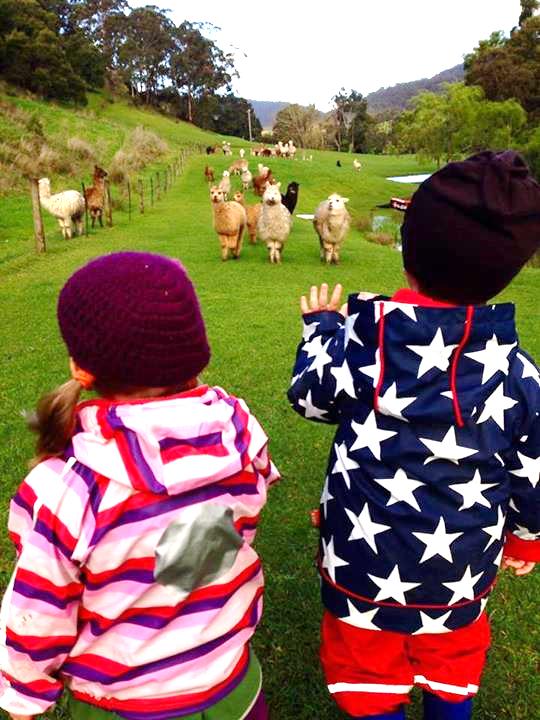 kids alpacas